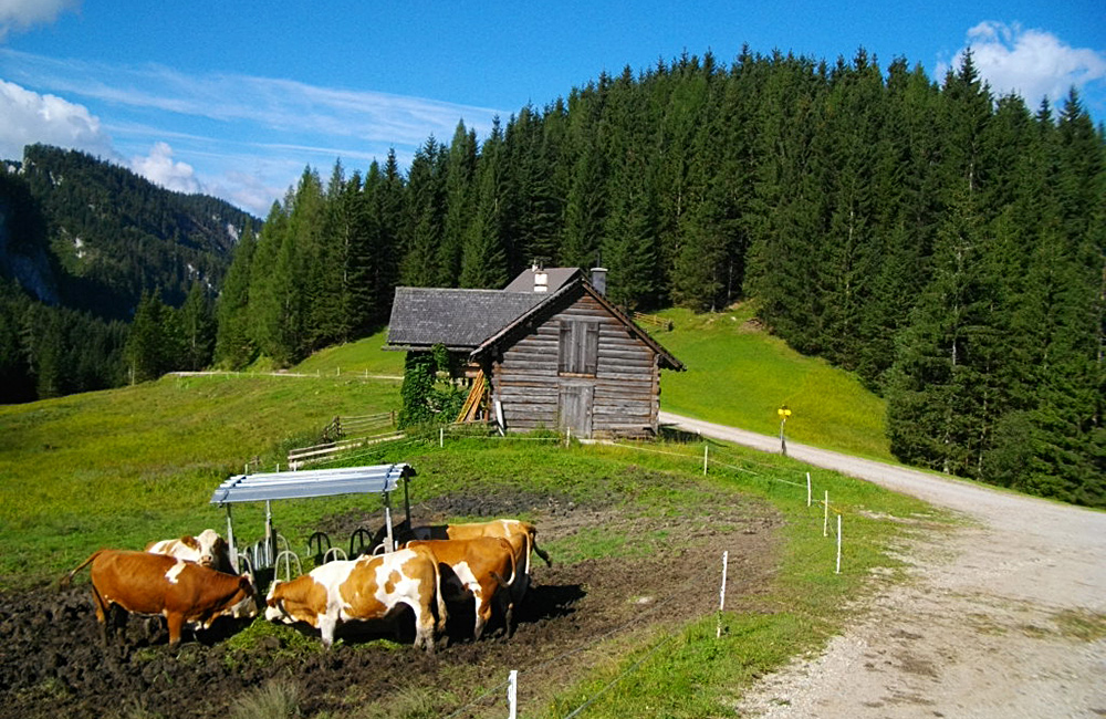 independent trekking tours in austria