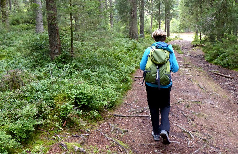 inn to inn walking tours germany black forest