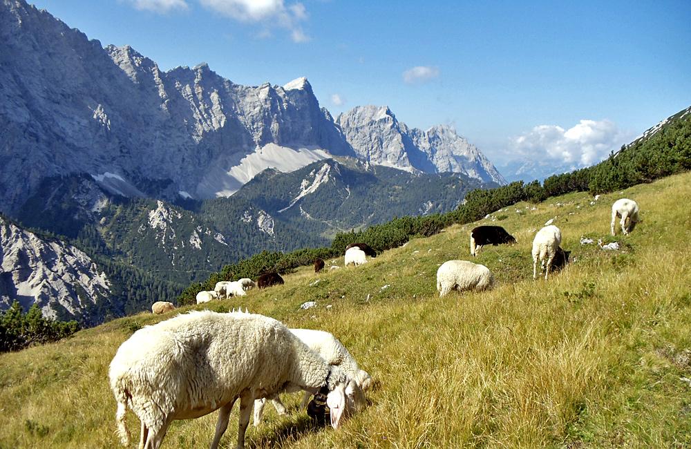 independent trekking in the german alps