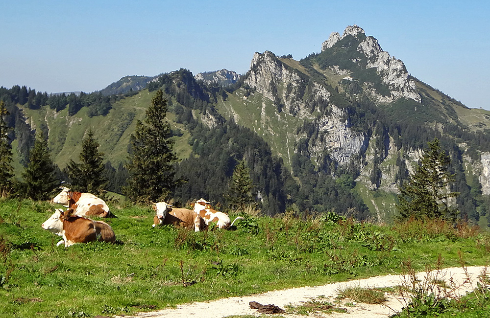 self-guided walking holidays in the alps