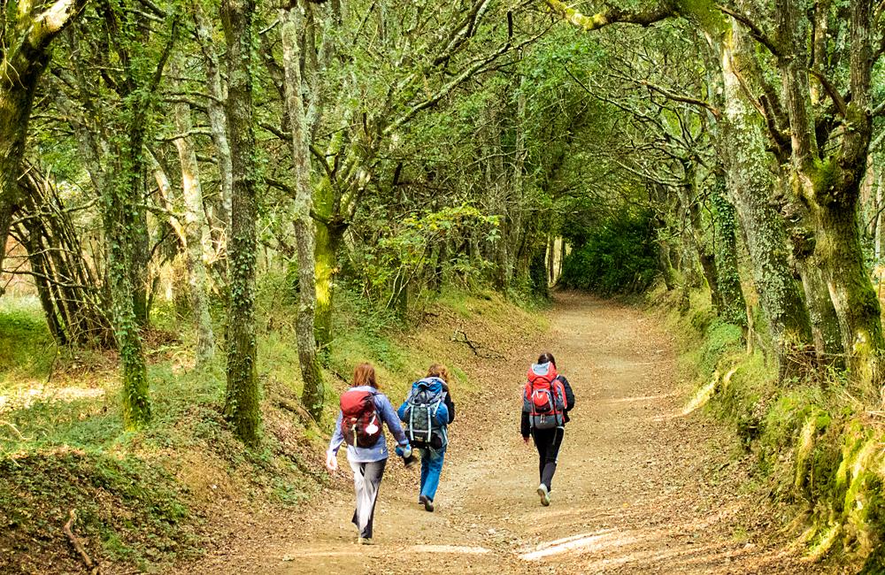 independent camino de santiago hiking