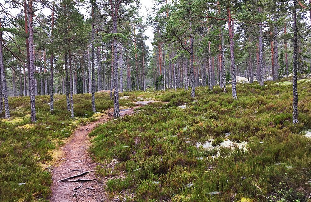 high coast trek in sweden