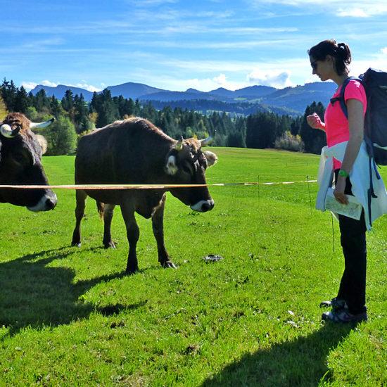 self-guided walking tour bregenz austria