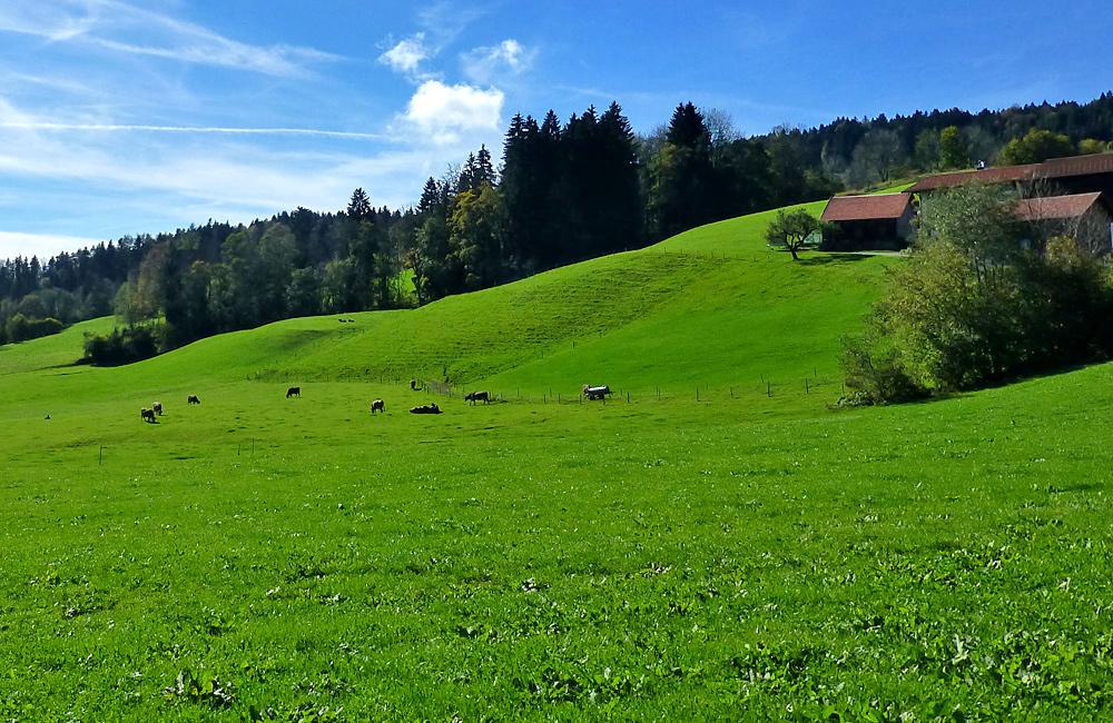 independent walking tour austria bregenz