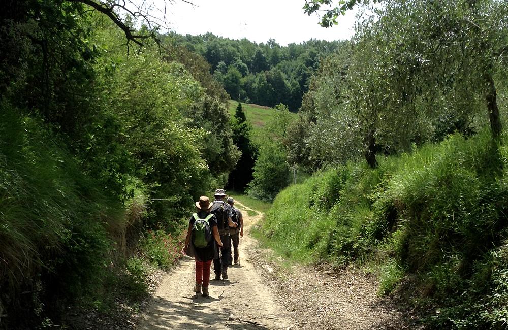 walking tour along via francigena in tuscany, italy