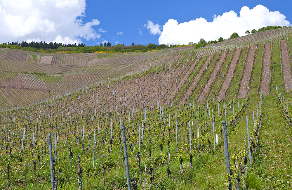 moselle and eifel walking tours in germany