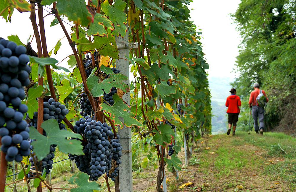 piedmont independent walking tour in italy