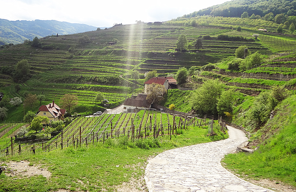 wachau trekking and walking in austria
