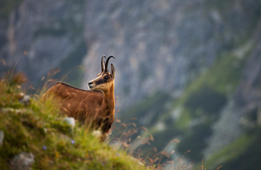trekking in tatra mountains poland