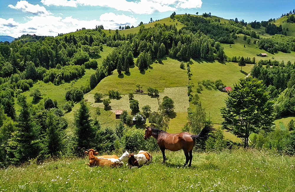 self-guided walking and trekking in romania and transylvania