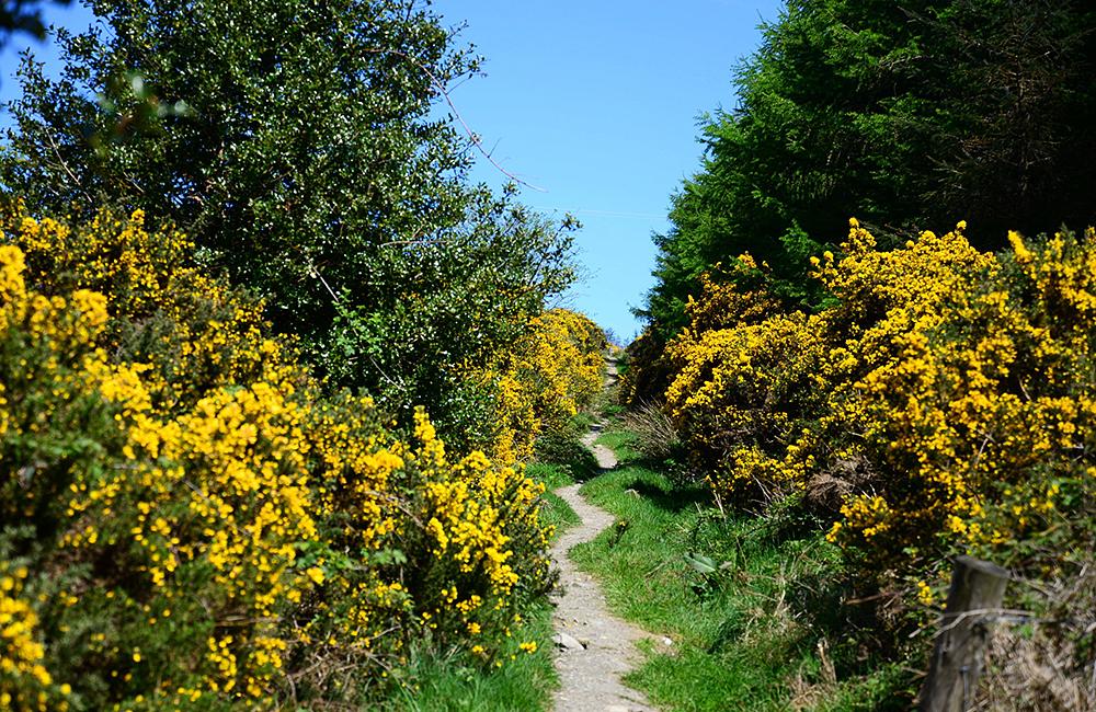 trekking holiday in ireland, wicklow way