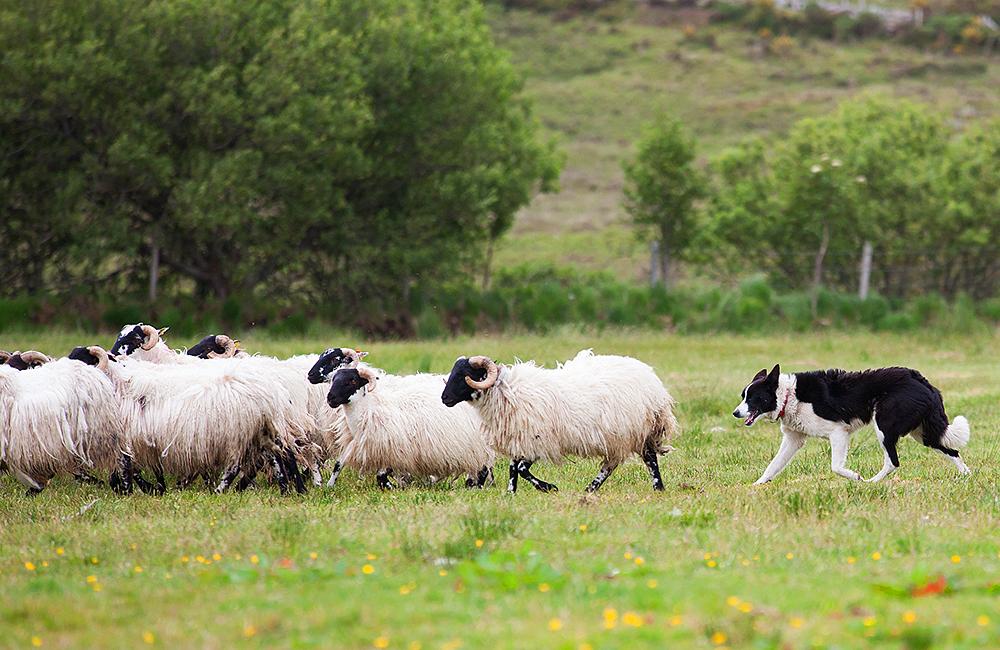 independent walking tour in ireland, wicklow way