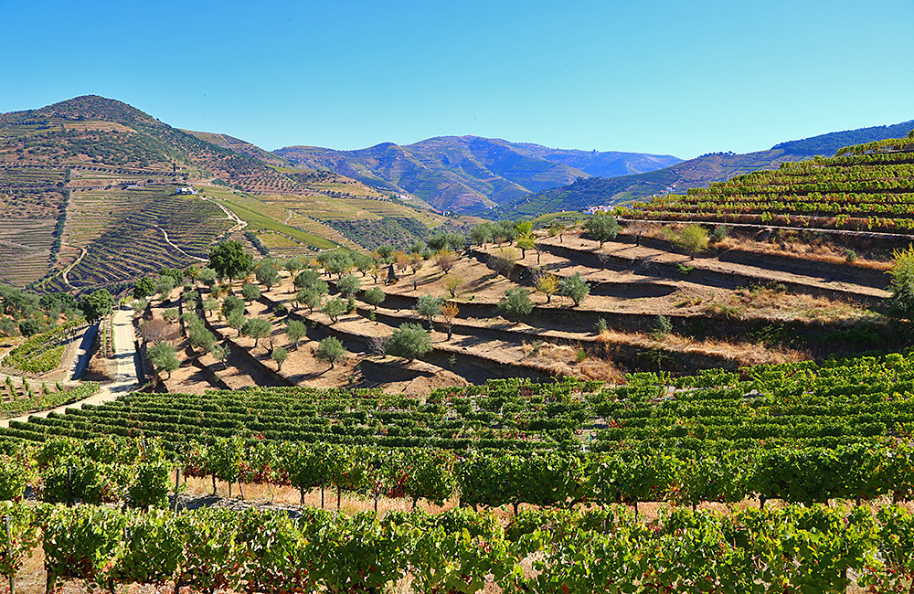 douro-independent-walking-portugal
