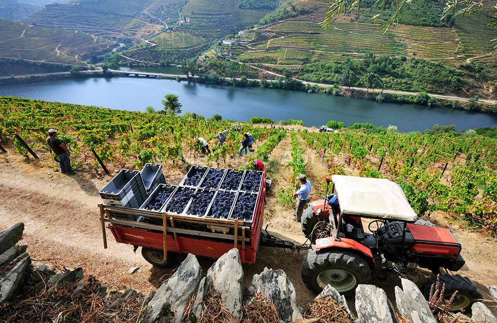 douro-self-guided-hiking-tours