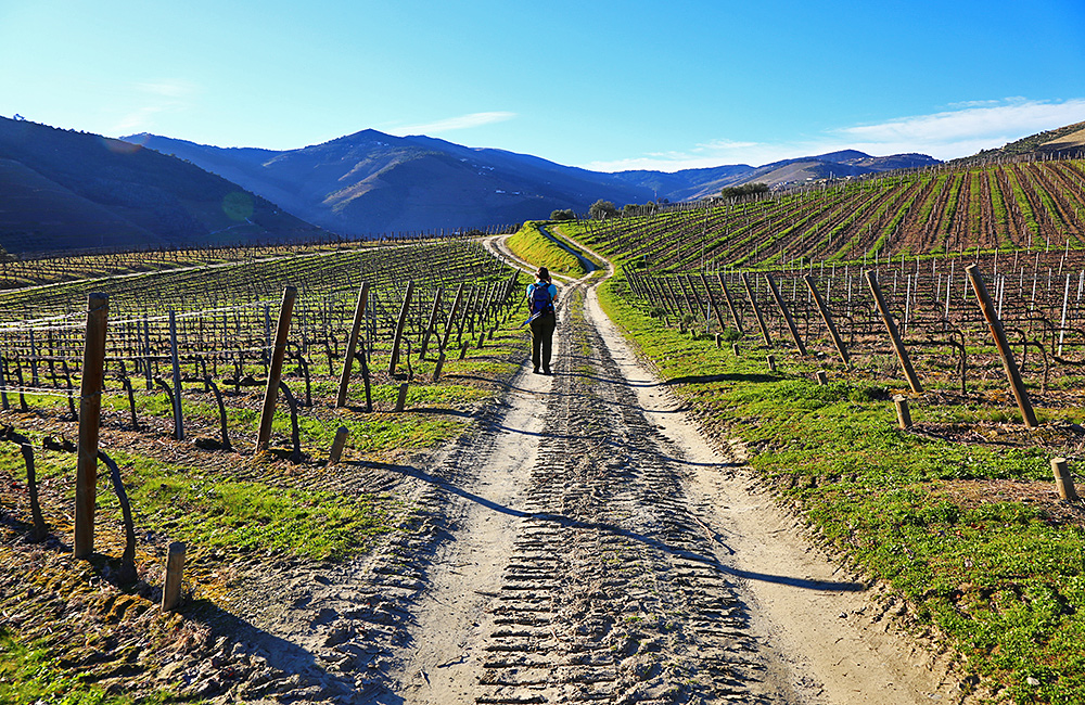 portugal-self-guided-walking-douro
