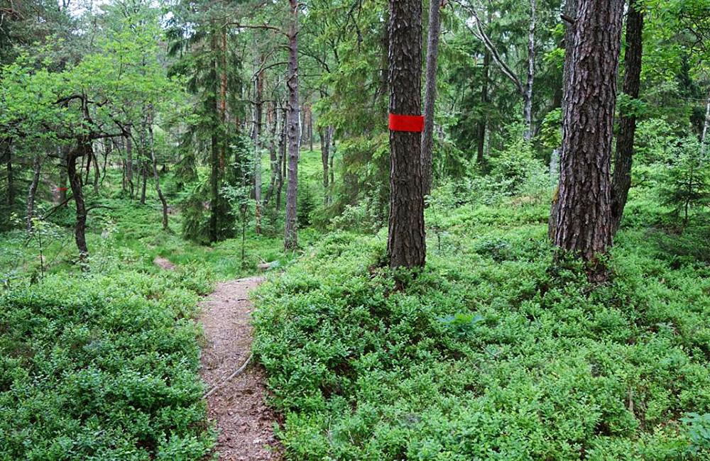 hallandsleden self-guided hiking and walking tour in sweden